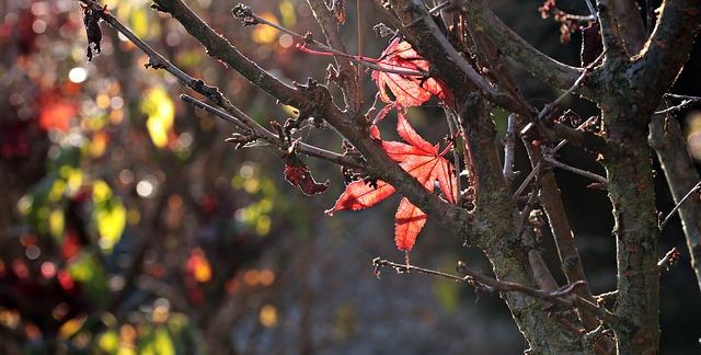 opadaný strom na podzim