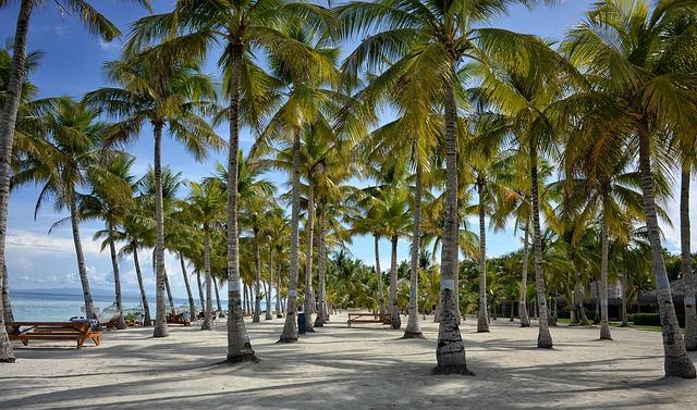 pláž s palmami na ostrově
