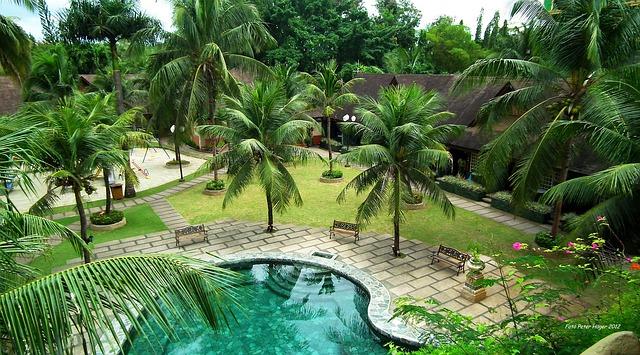bazén mezi palmami