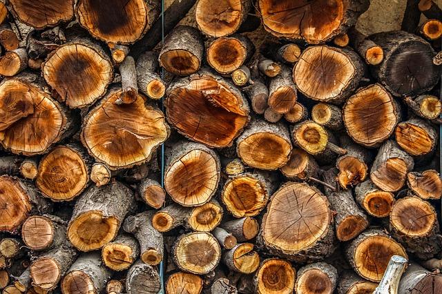 dřevo – kulatina